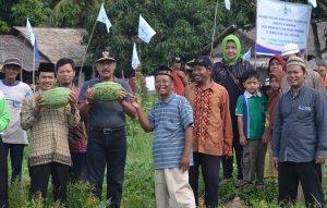 panen semangka lpp nu kayong kabupaten  utara oleh haji samadikun dan wakil bupati idrus dan para tokoh masyarakat sukadana simpang hilir dll