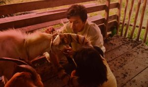 rutinitas sore hari ternak kambing kayong utara dinas peternakan kku perikanan kkudf