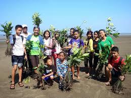 menanam pohon-usaid ifacs-warta kayong