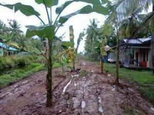 kayong utara Jalan Berlumpur di Musim Hujan tanjung satai kamboja 2014