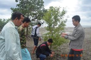 mpm kayong utara sebar virus cinta mangrove 2014 lokasi di tanjung satai pantai kerang 2015