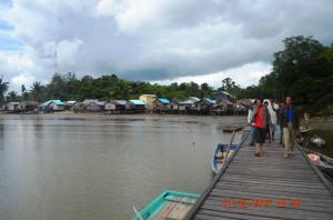 mpm kayong utara sebar virus cinta mangrove 2014lokasi di tanjung satai pantai kerang 2015