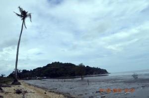 mpm kayong utara sebar virus cinta mangrove 2014mpm kayong utara sebar virus cinta mangrove 2014 lokasi di Desa Tanjung satai  pantai kerang  2015