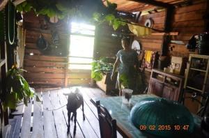 Febri, Kambing Aneh Dari Pulau Kumbang 2015