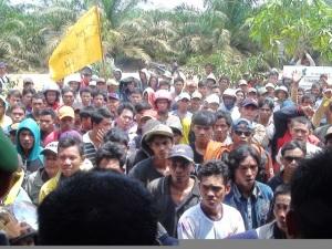 Jatah Plasma Lubuk Batu, Untuk Rakyat Atau Siapa  2015 demo plasma pt JV dan cus demo