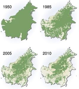 kondisi hutan di kalimantan 2010