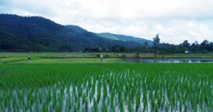 petani di payak hitam sukadana pertanian--Pentingnya Data Base Pertanian--ok warta kayong