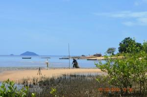suasana pantai pasir mayang yang indah dari sela sela mangrove
