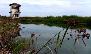 pembangunan kolam ikan rantau panjang yang tidak berfungsi, warta kayong kalbar