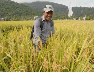 (warta pertanian) Budiman PPL Sedahan Jaya, di lokasi demplot Haston