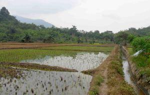 irigasi pertanian gunung 9, warta kayong, kalbar